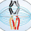 ícone meiose