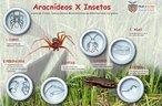 Os artrópodes são invertebrados que possuem apêndices corporais e um exoesqueleto quitinoso. Apresentam cinco classes: insecta, arachnida, crustacea, chilopoda e diplopoda, que são definidas utilizando critérios, como: divisão do corpo e número de patas. O maior número de representantes pertence a classe insecta. <br /><br /> Palavras-chave: invertebrados, artrópodes, aracnídeos, insetos, aranha-marrom, barata, Multimeios.