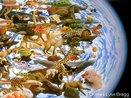 O termo biodiversidade, ou diversidade biológica, descreve a riqueza e a variedade do mundo natural. <br /><br/ > Palavra-chaves: Biodiversidade. Ecossistemas. Diversidade Biológica. Diversidade Genética.