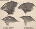 As várias espécies reconhecidas de tentilhões demonstraram o poder do método hipotético-dedutivo de Darwin, que baseando-se em anotações detalhadas da morfologia, hábitat e comportamento destes pássaros, representam um dos argumentos mais aceitos em seu livro sobre a origem das espécies.<br /><br /> Palavras-chave: Evolução. Darwin. Tentilhões.