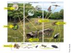 A imagem representa um quadro interativo sobre a diversidade na biosfera. </br></br> Palavra-chaves: biosfera, cadeia alimentar, consumidor, decompositor, diversidade, ecossistema florestal, teia alimentar.