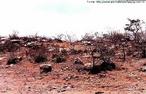Único bioma exclusivamente brasileiro, apresenta vegetação típica de regiões semiáridas com perda de folhagem pela vegetação durante a estação seca. </br></br> Palavra-chaves: caatinga, vegetação, bioma, clima, biodiversidade.