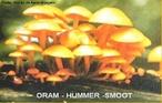 Grupo de organismos de dimensões consideráveis, como os cogumelos, mas também muitas formas microscópicas, como bolores e leveduras. </br></br> Palavra-chaves: cogumelo, fungo, cogumelos, leveduras, bolores, biodiversidade, botânica.
