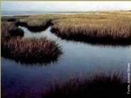 Um estuário é a parte de um rio que se encontra em contato com o mar. Por esta razão, um estuário sofre a influência das marés e possui tipicamente água salobra. </br></br> Palavra-chaves: estuário, rio, mar, água salobra, biodiversidade, relevo.
