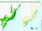 As regiões florestais são representadas em cor verde. </br></br> Palavra-chaves: Mata Atlântica, floresta