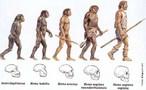 A teoria da evolução afirma que as espécies atuais descendem de outras espécies que sofreram modificações, através dos tempos. Os ancestrais das espécies atualmente existentes são considerados descendentes de predecessores diferentes deles, e assim por diante, a partir de organismos precursores, extremamente primitivos e desconhecidos. </br></br> Palavra-chaves: evolução humana, evolução biológica, evolução histórica, Darwin, habitat.