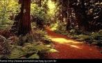 As florestas tropicais são um dos mais belos e antigos habitats naturais. Além de possuírem uma grande variedade de plantas e animais, elas desempenham também um papel importante na regularidade dos ciclos da chuva. Entretanto, essas florestas imponentes, bem como seu rico acervo de vida selvagem, vêm sendo destruídas a uma velocidade alarmante. </br></br> Palavra-chaves: Floresta Tropical, habitat, biodiversidade, botânica.