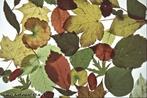 Ilustra folhas de diferentes formas e simetrias. </br></br> Palavra-chaves: folhas diversas, simetria, botânica, biodiversidade.