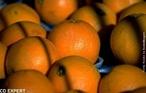 Fruta comestível rica em vitamina C, elemento antioxidante natural. </br></br> Palavra-chaves: fruta, laranja, vitamina C, biodiversidade.