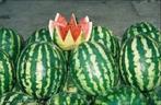 Fruta rasteira de origem africana, mas muito cultivada no Brasil. Aproximadamente, 90% do seu corpo é composto por água, e em função de sua grande quantidade de água, atua como um excelente diurético no corpo humano. Possui também propriedades digestivas. É uma fruta rica em sais minerais (ferro, cálcio e fósforo) e vitaminas (complexo B, A e C). </br></br> Palavra-chaves: fruta, melancia, reino plantae, saúde.
