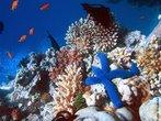 É um valioso ecossistema que possui uma grande diversidade de seres vivos. </br></br> Palavra-chaves: fundo do mar, ecossitema, seres vivos, biodiversidade.