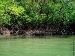 Ecossistema costeiro, de transição entre os ambientes terrestre e marinho, característico de regiões tropicais e subtropicais. </br></br> Palavra-chaves: mangue, ecossistema, meio ambiente, biodiversidade.