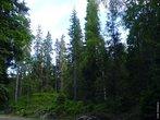 A Taiga, também conhecida como floresta de coníferas ou floresta boreal, localiza-se exclusivamente no Hemisfério Norte, encontra-se em regiões de clima frio e com pouca umidade. </br></br> Palavra-chaves: taiga, floresta de coníferas, floresta boreal, hemisfério norte, clima frio, biodiversidade, meio ambiente.