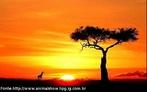 A África é um território banhado pelo Oceano Atlântico, pelo Mar Mediterrâneo e pelo Oceano Índico, onde provavelmente surgiram os primeiros seres humanos. Os mais antigos fósseis de hominídeos foram encontrados na África e têm cerca de cinco milhões de anos.  </br></br> Palavra-chaves: ambiente africano, continente, evolução, biodiversidade.