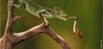 Insetívoros são aqueles animais que se alimentam principalmente ou exclusivamente de insetos. </br></br> Palavra-chaves: insetívoro, inseto, consumidores.