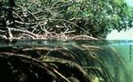 O Manguezal, também chamado de Mangue, é um ecossistema costeiro, de transição entre os ambientes terrestre e marinho, uma zona úmida característica de regiões tropicais e subtropicais. </br></br> Palavra-chaves: ecossistema. mangue, vegetação.