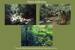 A mata atlântica originalmente percorria o litoral brasileiro de ponta a ponta. Estendia-se do Rio Grande do Norte ao Rio Grande do Sul, e ocupava uma área de 1,3 milhão de quilômetros quadrados. Tratava-se da segunda maior floresta tropical úmida do Brasil, só comparável à Floresta Amazônica. </br></br> Palavra-chaves: Mata Atlântica, floresta, litoral brasileiro, meio ambiente, biodiversidade