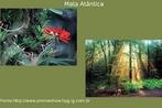 A mata atlântica originalmente percorria o litoral brasileiro de ponta a ponta. Estendia-se do Rio Grande do Norte ao Rio Grande do Sul, e ocupava uma área de 1,3 milhão de quilômetros quadrados. Tratava-se da segunda maior floresta tropical úmida do Brasil, só comparável à Floresta Amazônica. </br></br> Palavra-chaves: Mata Atlântica, floresta, litoral brasileiro, meio ambiente, biodiversidade.