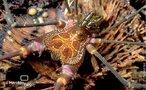 Com oito longas pernas, quelíceras e múltiplos olhos, muitas vezes é confundido com uma aranha. Eles pertencem à classe dos aracnídeos, porém divergem das aranhas na classificação Ordem, opiliones para os opiliões e araneae para as aranhas. Uma diferença importante entre aranhas e opiliões é que estes não tecem teia e nem possuem veneno. Para caçar eles utilizam os pedipalpos (primeiro par de pernas) e as quelíceras. Alimentam-se de pequenos invertebrados, material em decomposição e até de seiva de árvores. Para defesa, possuem uma glândula odorífera que secreta um intenso mau-cheiro e pode até ser tóxica para alguns animais. Quando ameaçado, pode se fingir de morto e até perder uma perna que, continua se movimentando em espasmos randômicos. </br></br> Palavra-chaves: opilião, opiliones, aracnídeos.