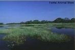 O  Pantanal é um dos mais valiosos patrimônios naturais do Brasil. Maior área úmida continental do planeta - com 140 mil km2 em território brasileiro - destaca-se pela riqueza da fauna, onde dividem espaço 650 espécies de aves, 80 de mamíferos, 260 de peixes e 50 de répteis. </br></br> Palavra-chaves: Pantanal, bioma, biodiversidade, ambiente.