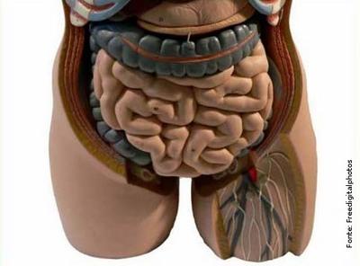 Anatomia dos orgãos do corpo humano