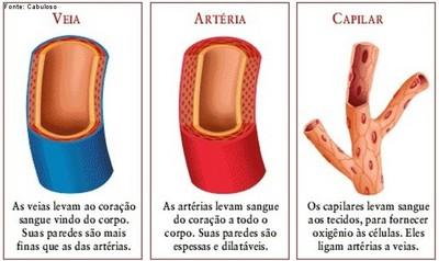Os vasos sanguíneos são de três tipos básicos: veias, artérias e capilares.</br> Veias: levam ao coração sangue vindo do corpo. Suas paredes são mais finas que as artérias.</br> Artérias: levam sangue do coração a todo o corpo. Suas paredes são espessas e dilatáveis.</br> Os capilares levam sangue aos tecidos, para fornecer oxigênio às células. Eles ligam artérias e veias. </br></br> Palavras-chave: vasos sanguíneos, sistema circulatório, artérias, arteríolas, capilares, vênulas, veias.