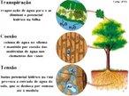 Teoria da coesão da água: a transpiração nas folhas exerce uma pressão negativa, que puxa cada vez mais água para cima. </br></br> Palavras-chave: botânica, fisiologia, coesão da água..