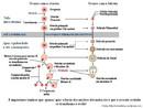 A ovogênese é o processo da gametogênese feminina, no qual, através de uma sequência de eventos, as ovogônias são transformadas em ovócitos maduros. <br /><br / > Palavras-chave: Ovogênese. Sistema Reprodutor Feminino. Gametogênese.