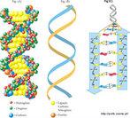 São compostos químicos sintetizados por seres vivos, e que participam da estrutura e do funcionamento da matéria viva. São, na sua maioria, compostos orgânicos, cujas massas são formadas em 97% de C, H, O e N (Carbono, Hidrogênio, Oxigênio e Nitrogênio). Ou seja, são as proteínas, glicídios, lipídios, DNA, etc. O elemento principal é o carbono, pois é capaz de formar quatro ligações. <br /><br /> Palavras-chave: biomoléculas, macromoléculas, compostos orgânicos, proteínas, ácidos nucléicos, carboidratos, lipídios. sistemas biológicos.