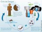 O ciclo de transmissão do vírus do dengue começa em uma pessoa que já esteja infectada com a doença. O <em>Aedes aegypti</em> adquire o vírus quando se alimenta do sangue do doente; no entanto, para que isso aconteça, é necessário que o enfermo apresente o vírus circulando em seu sangue (período denominado viremia e que dura em média cinco dias).Uma vez dentro do <em>Aedes aegypti</em>, o vírus multiplica-se no intestino médio do inseto (parte conhecida como mesêntero) e, com o tempo, passa para outros órgãos, como os ovários, o tecido nervoso e, finalmente, as glândulas salivares, de onde sairá para a corrente sangüínea de outro humano picado. <br /><br /> Palavras-chave: dengue, vírus, <em>Aedes aegypti</em>.