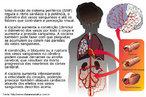 Sintetizada em 1859, a cocaína tem como origem a planta Erythroxylon coca, um arbusto nativo da Bolívia e do Peru (mas também cultivado em Java e Sri-Lanka). As propriedades primárias da droga bloqueiam a condução de impulsos nas fibras nervosas, quando aplicada externamente, produzindo uma sensação de amortecimento e enregelamento. A droga também contrai os vasos sanguíneos inibindo hemorragias, além de funcionar como anestésico local, sendo este um dos seus usos na medicina. Ingerida ou aspirada, a cocaína age sobre o sistema nervoso periférico, inibindo a reabsorção, pelos nervos, da norepinefrina (uma substância orgânica semelhante à adrenalina). Assim, ela potencializa os efeitos da estimulação dos nervos. A cocaína é também um estimulante do sistema nervoso central, agindo sobre ele com efeito similar ao das anfetaminas. <br /><br /> Palavras-chave: cocaína, sistema nervoso, corrente sanguínea, adrenalina, anfetaminas, dependência química.