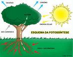 A palavra fotossíntese significa síntese que usa luz. Pode-se definir como fotossíntese, a atividade vital que as plantas realizam em função da luz solar, transformando a energia luminosa em energia química. Através da clorofila, composto presente nas folhas, a seiva bruta é transformada em seiva elaborada através do processo de fotossíntese. A reação da fotossíntese é baseada no processamento do dióxido de carbono (CO2), água (H2O) e sais minerais (xilema) em compostos orgânicos, produzindo oxigênio gasoso (O2) e glicose (C6H12O6), compondo a seiva elaborada. </br></br> Palavras-chave: fotossíntese, energia bioquímica, reação química, compostos orgânicos, meio ambiente.