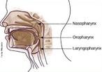 A faringe é um órgão cavitário alongado em forma de funil, situado logo após a boca. Ela se comunica com a boca, com as cavidades nasais, com a laringe e com o estômago. </br></br> Palavras-chave: faringe, órgão cavitário, digestão.