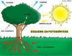 A fotossíntese é o processo pelo qual a planta sintetiza compostos orgânicos a partir da presença de luz, água e gás carbônico. Ela é fundamental para a manutenção de todas as formas de vida no planeta, pois todas precisam desta energia para sobreviver. </br></br> Palavras-chave: fotossíntese, gás carbônico, glicose, gás oxigênio.
