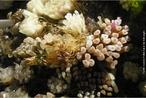 Ooteca é uma espécie de estojo onde ficam os ovos. </br></br> Palavras-chave: ootecas de caramujos, ovos, biodiversidade, zoologia.