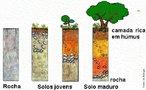 A camada de rochas na superfície da Terra está, há milhões de anos, exposta a mudanças de temperatura e à ação da chuva, do vento, da água dos rios e das ondas do mar. Tudo isso vai, aos poucos, fragmentando as rochas e provocando transformações químicas. Foi assim, pela ação do intemperismo, que, lentamente, o solo se formou. E é dessa mesma maneira que está continuamente se remodelando. Os seres vivos também contribuem para esse processo de transformação das rochas em solo. <br /><br /> Palavras-chave: solo, pedogênese, formação do solo.
