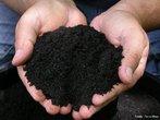 Húmus é a matéria orgânica depositada no solo, resultante da decomposição de animais e plantas mortas, ou de seus subprodutos. O processo de formação do húmus é chamado humificação e pode ser natural, quando produzido espontâneamente por bactérias e fungos do solo (os organismos decompositores), ou artificial, quando o homem induz a produção de humus, adicionando produtos químicos e água a um solo pouco produtivo. <br /><br /> Palavras-Chave: húmus, agricultura, decomposição, ecologia, matéria orgânica, solo.